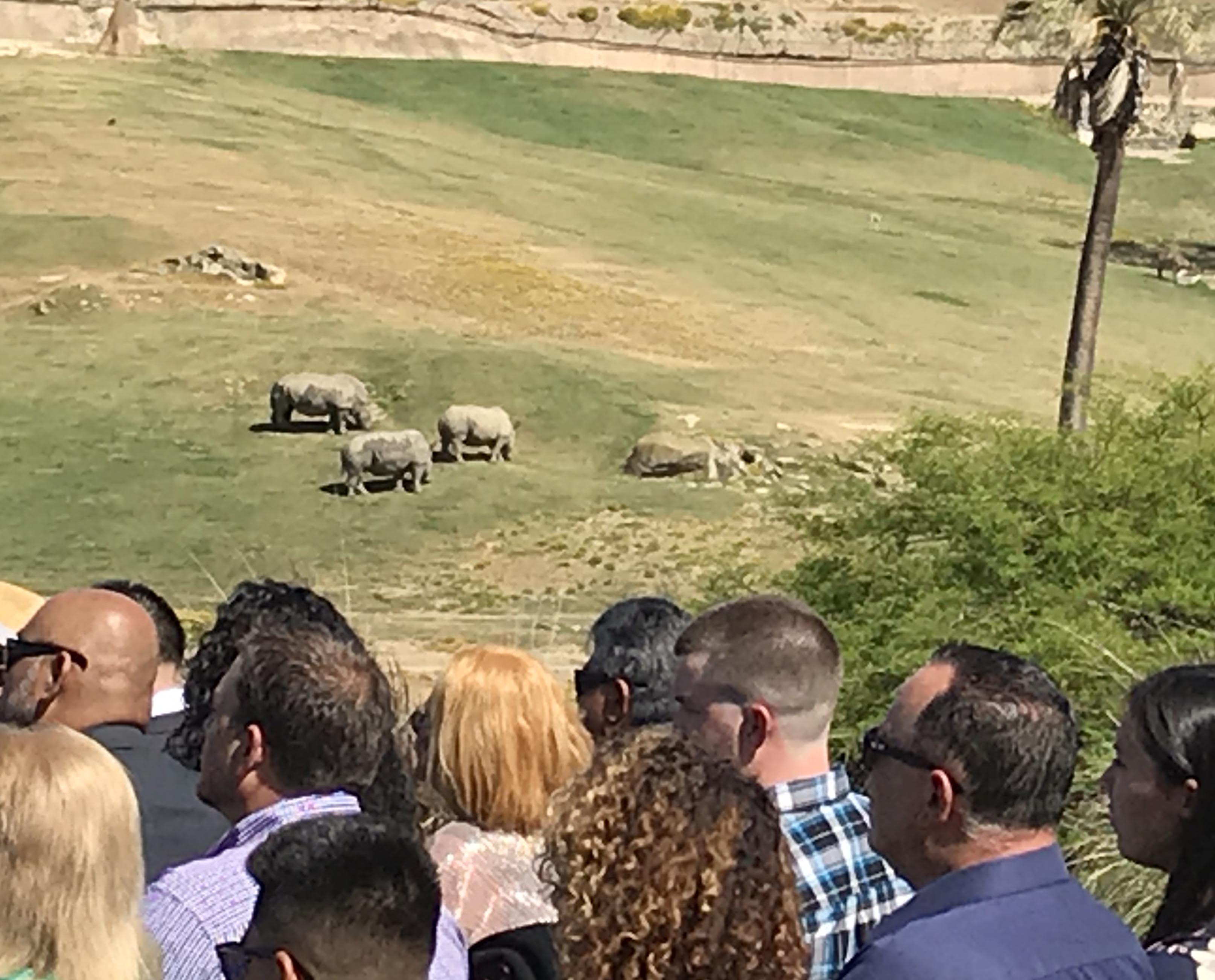 Wild Weddings at the San Diego Zoo-Safari Park